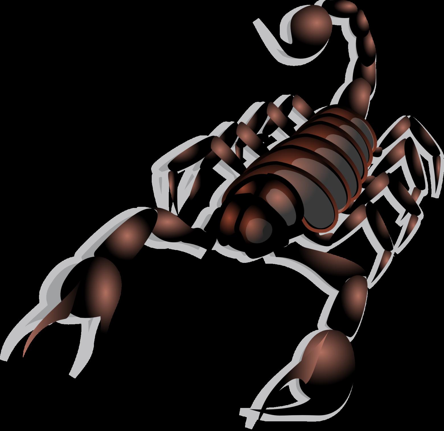 Connu images vectorielles gratuites et libres de droits le scorpion  JW69
