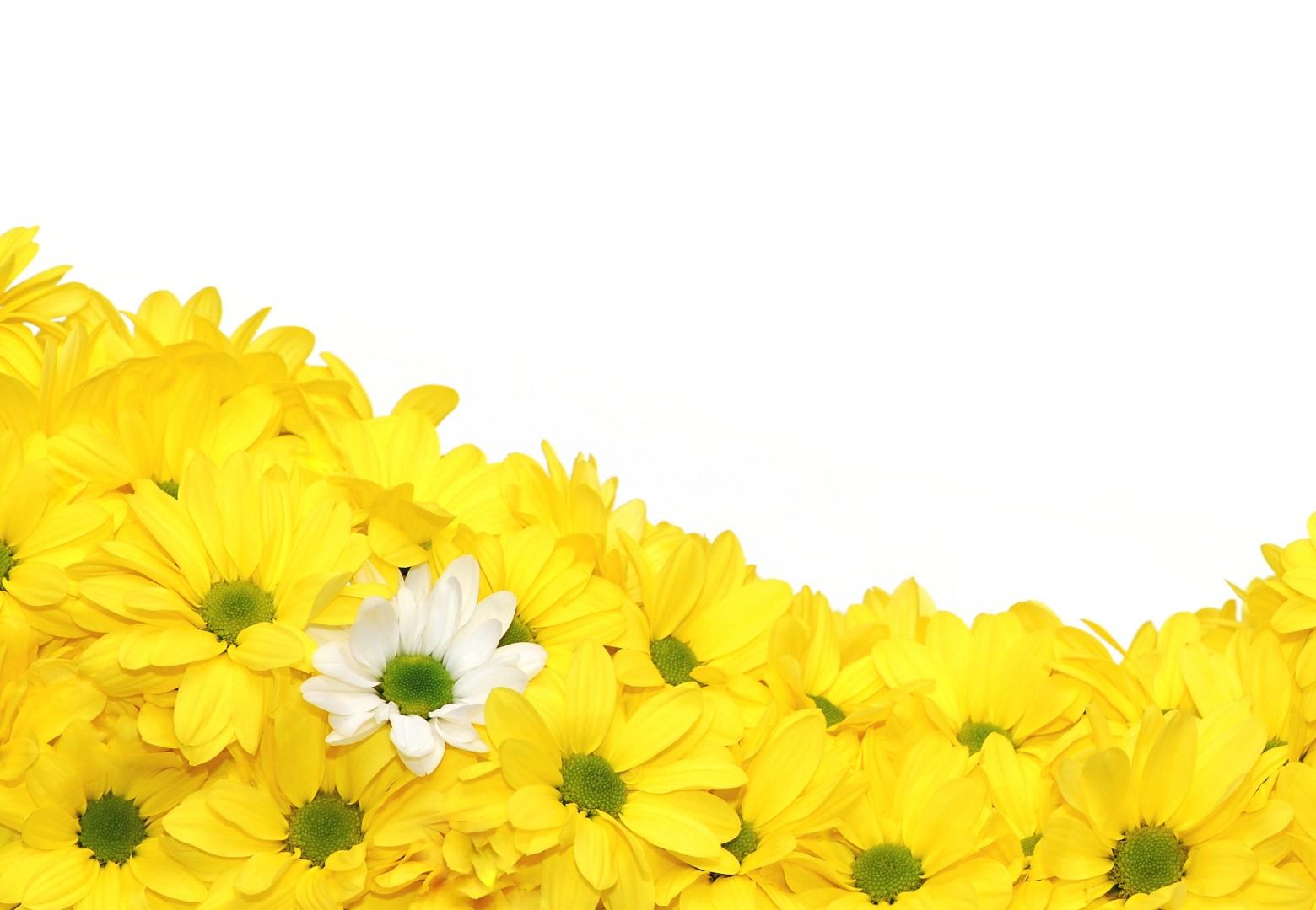 fleurs jaune fond blanc. Black Bedroom Furniture Sets. Home Design Ideas