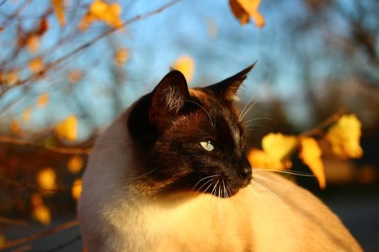 animaux faune cat gories du t l chargement images gratuites et libres de droits page 100. Black Bedroom Furniture Sets. Home Design Ideas