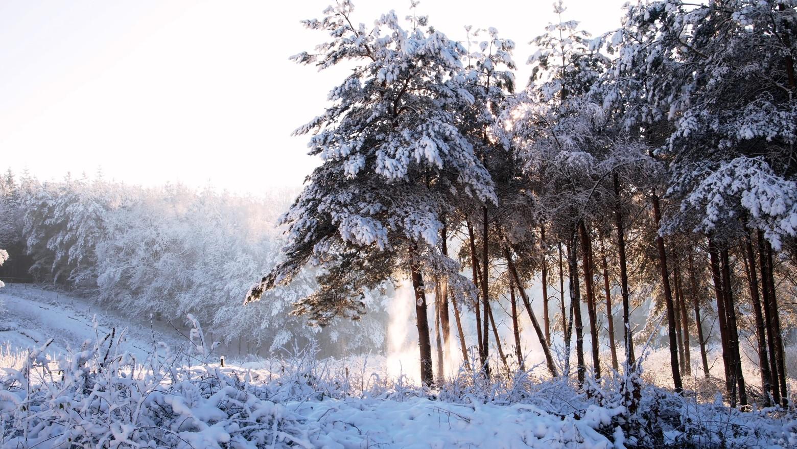 Hiver neige for t photos gratuites images gratuites et - Photos de neige gratuites ...