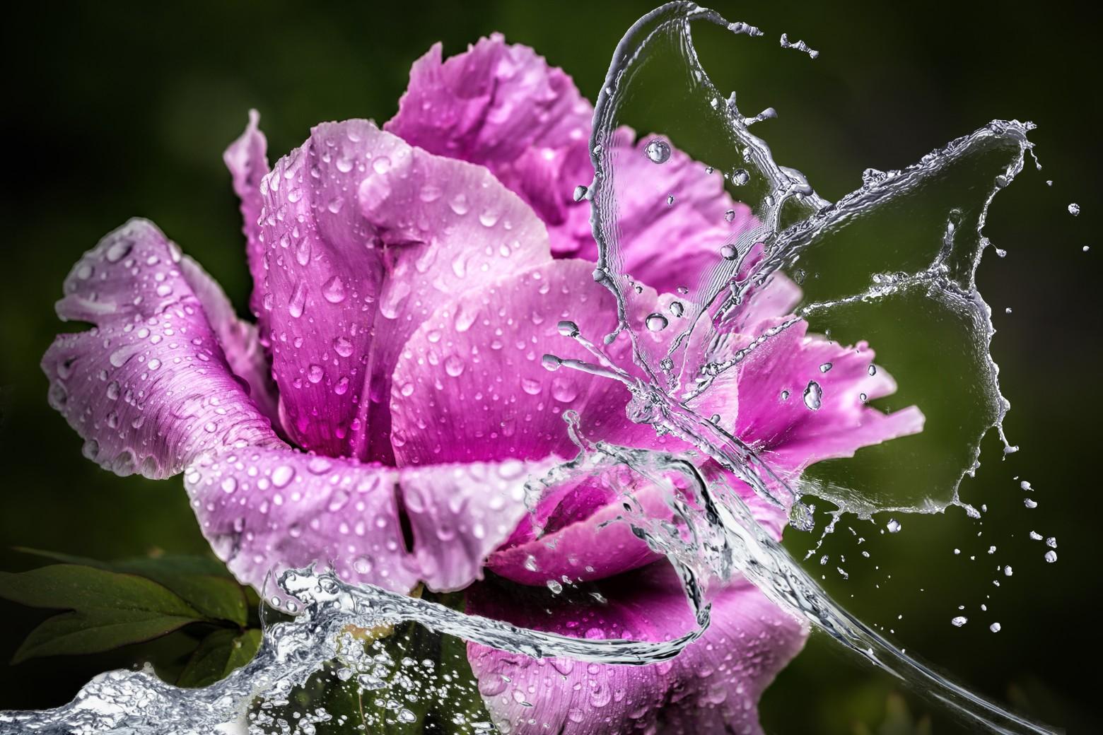 le pluie goutte fleur photos gratuites images gratuites et libres de droits. Black Bedroom Furniture Sets. Home Design Ideas