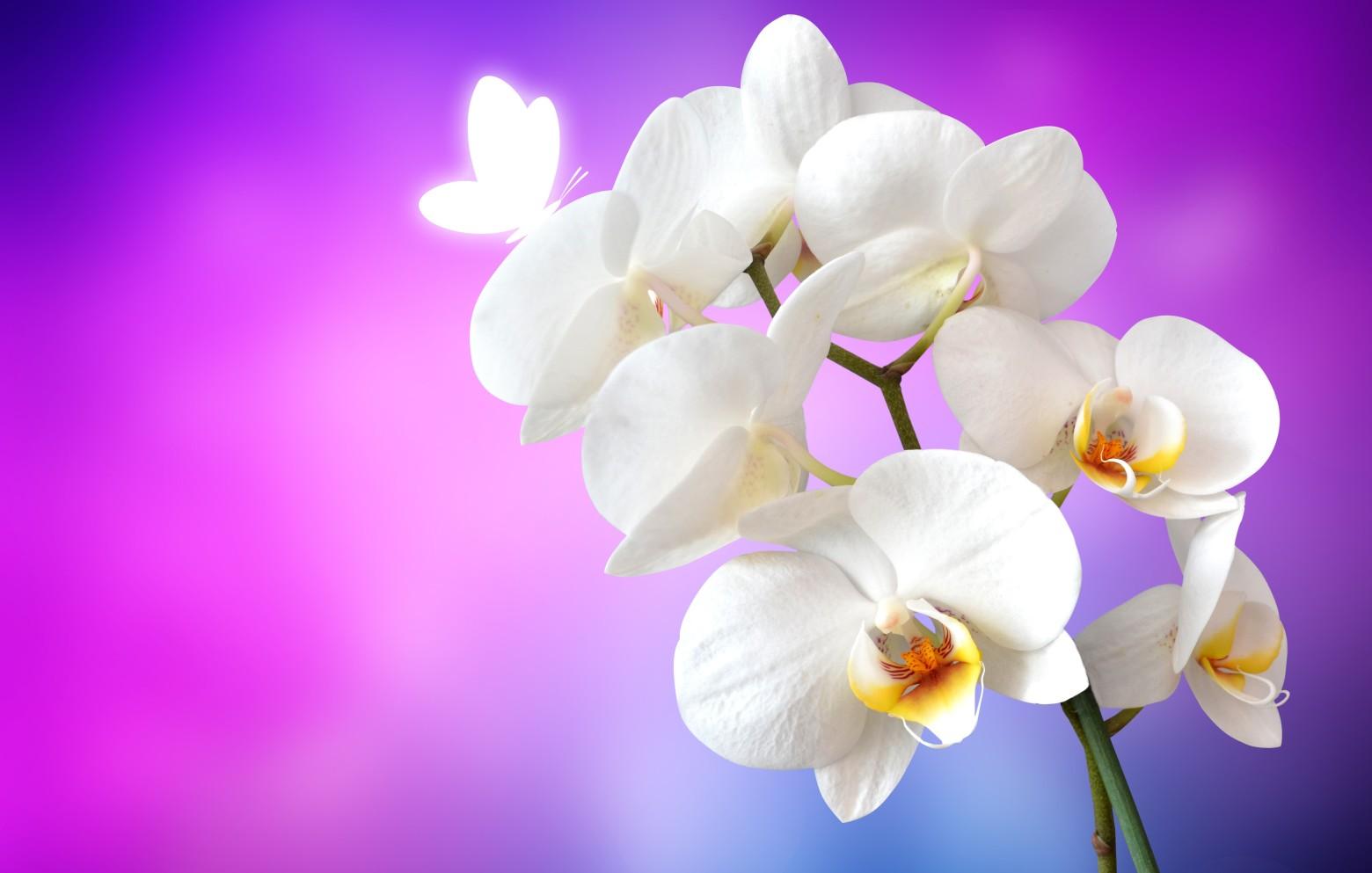 Fond D Ecran Gratuit Orchidee Zen