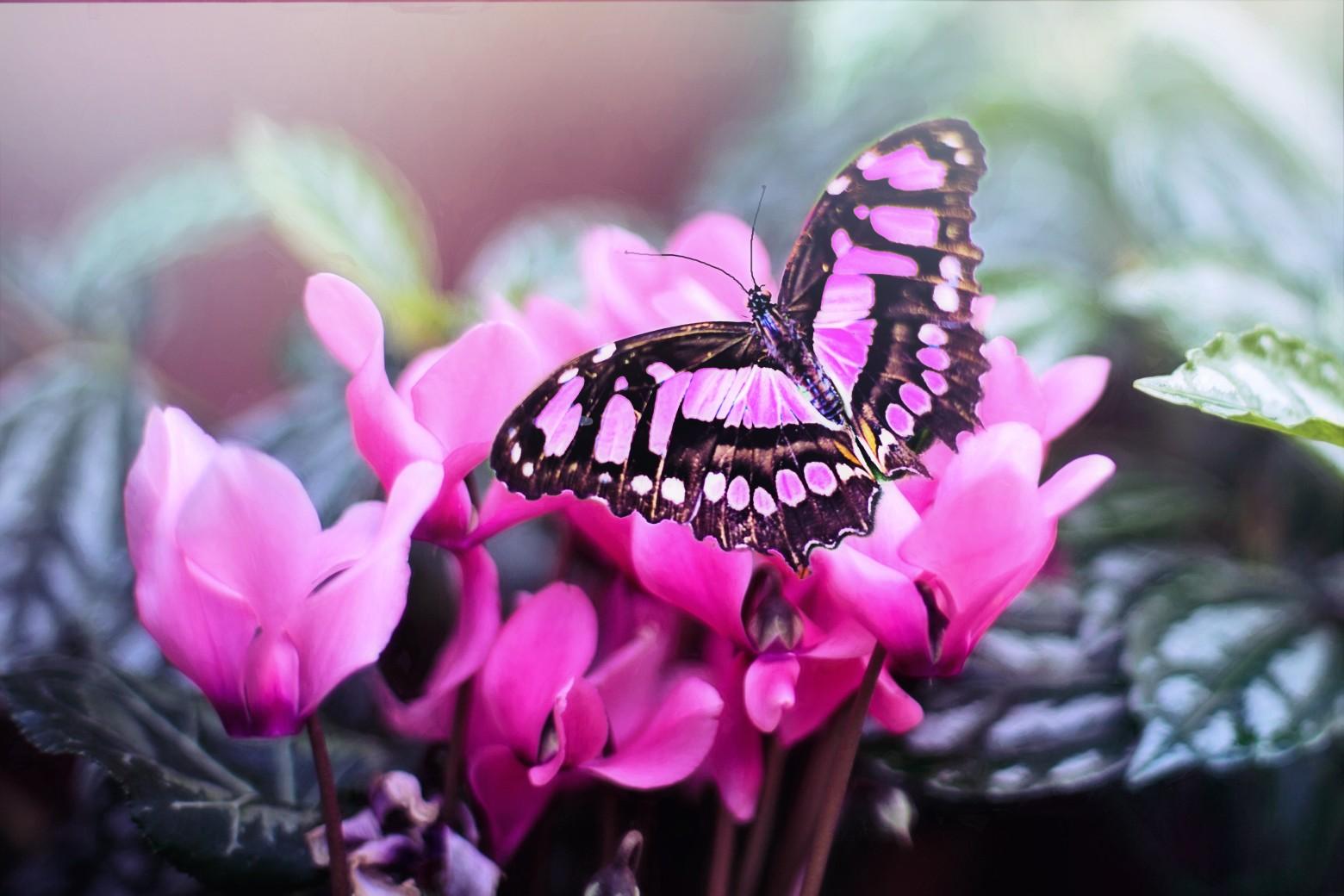 fleurs papillon printemps photo gratuite images gratuites et libres de droits. Black Bedroom Furniture Sets. Home Design Ideas