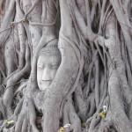 Tête-de-Bouddha