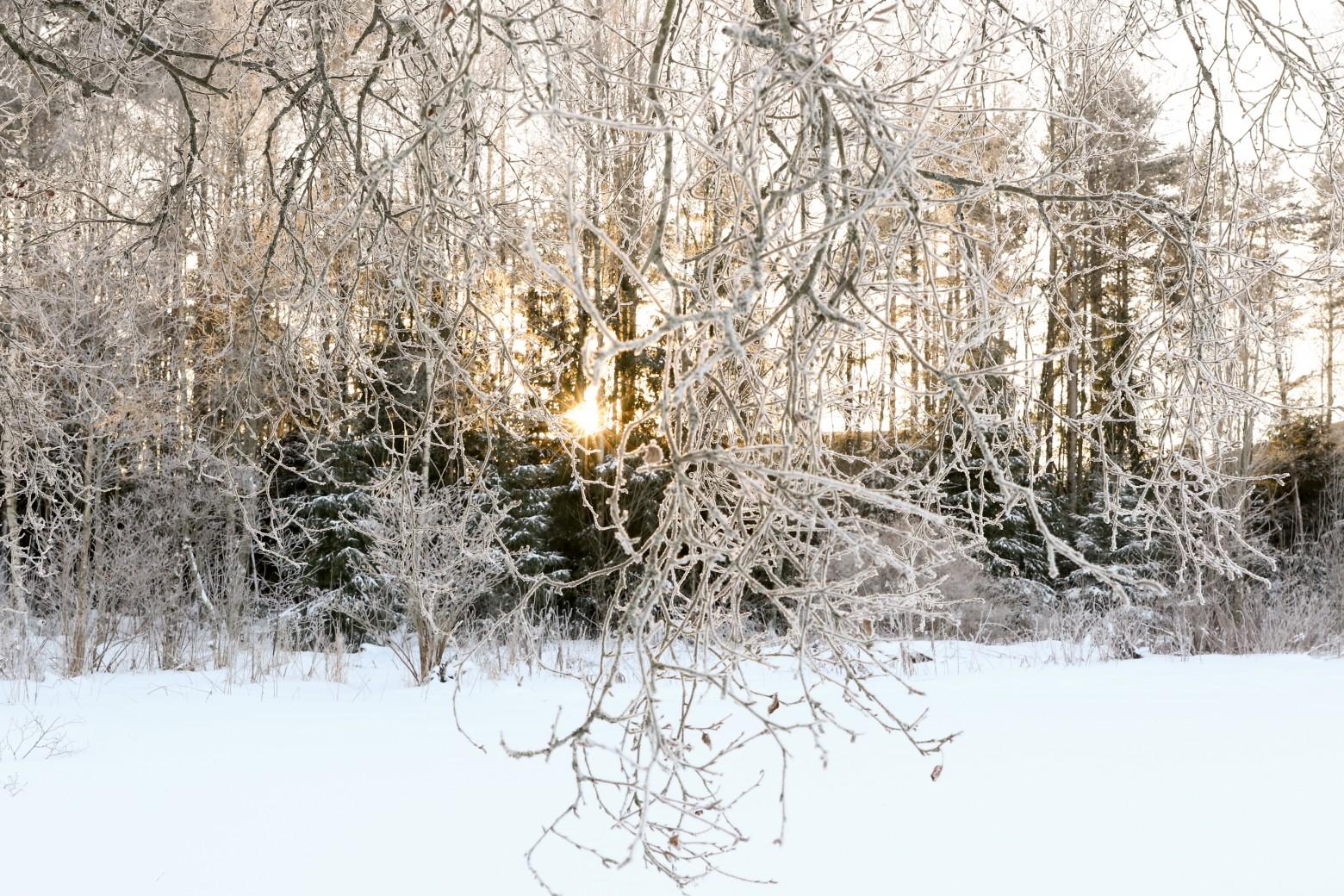 fotomelia-site-images-libres-de-droits-