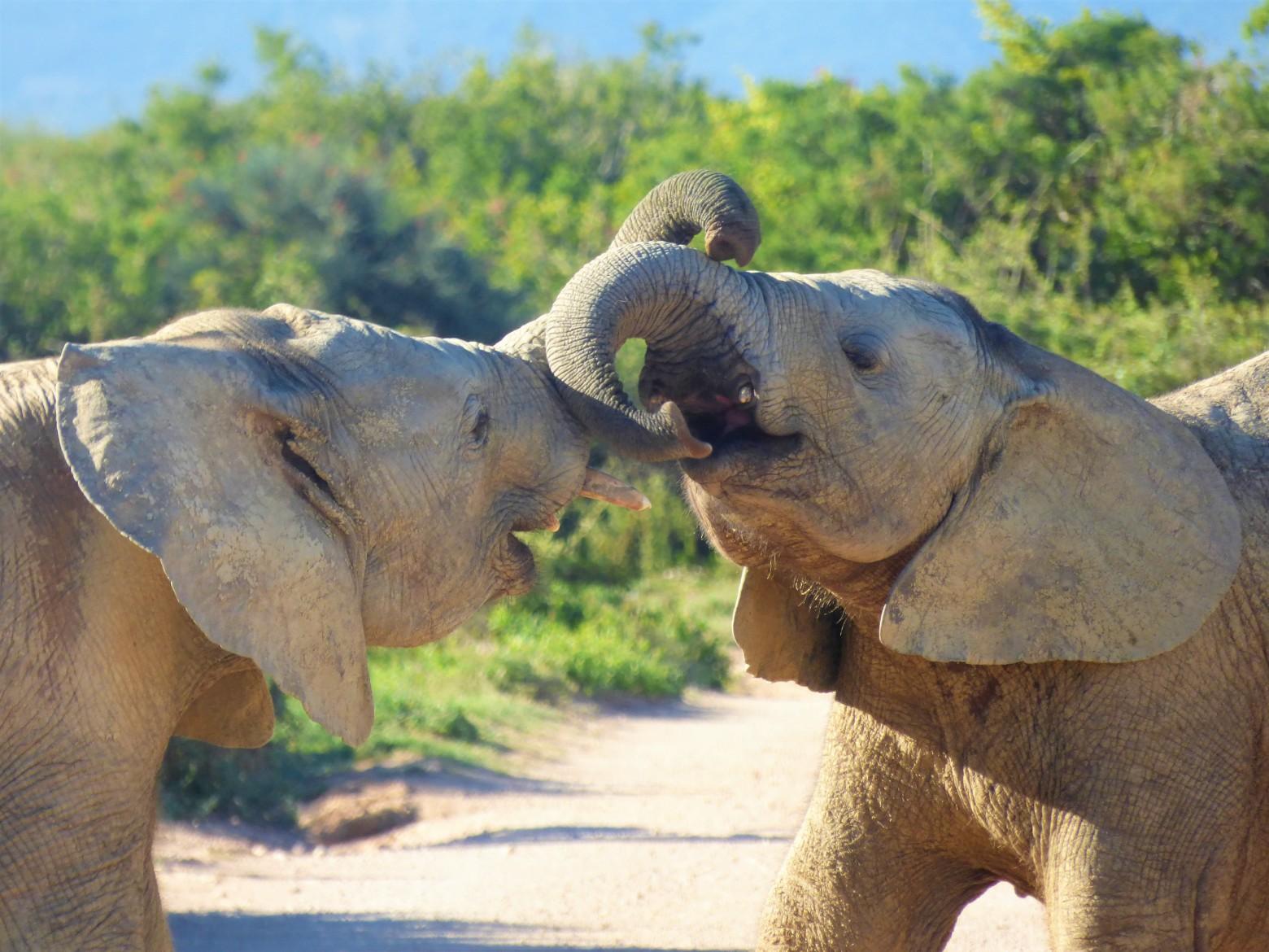 Photos d elephants gratuites - Photos d elephants gratuites ...