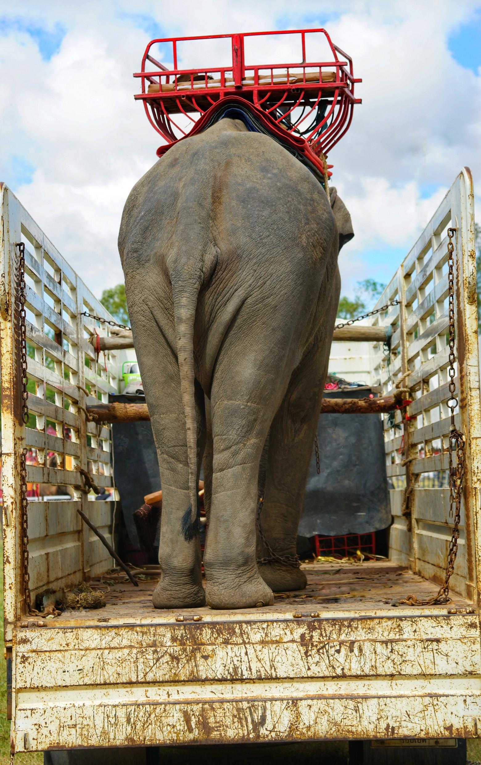 Images gratuites l phant images gratuites et libres de droits - Photos d elephants gratuites ...