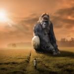 animaux belles images gratuites : gorille