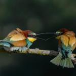oiseaux et prise de bec