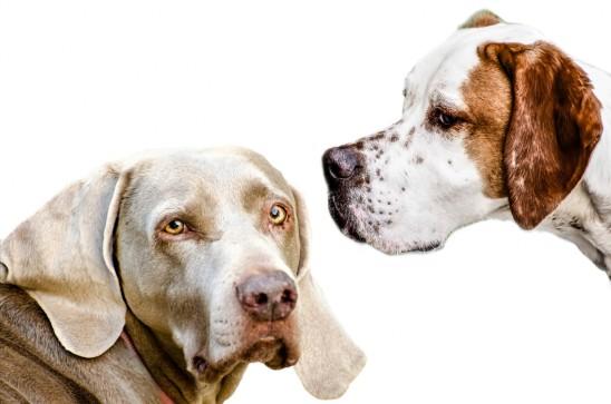 chien couple portrait à deux