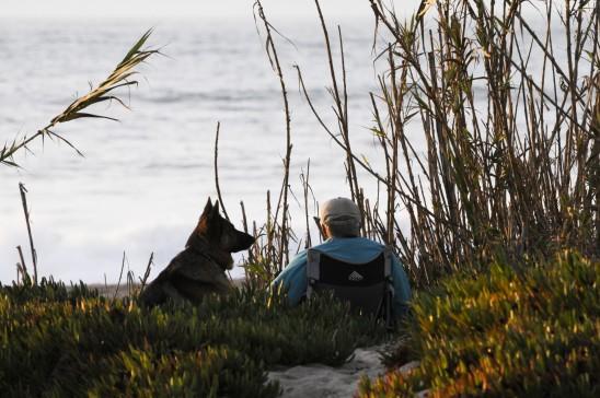 enfant petit garçon et un chien berger allemand