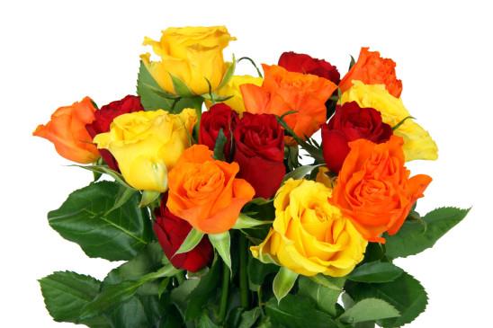 fleur bouquet de roses de toute les couleurs
