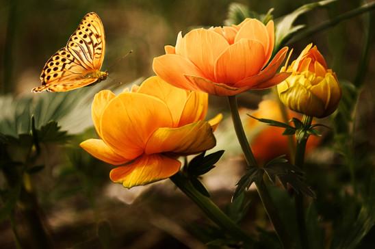 jolie fleur jaune et papillon