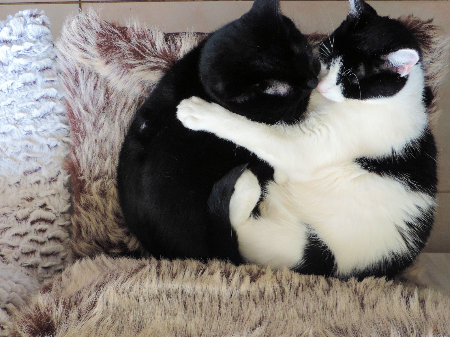 amour chat couple