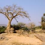 paysage désert arbre