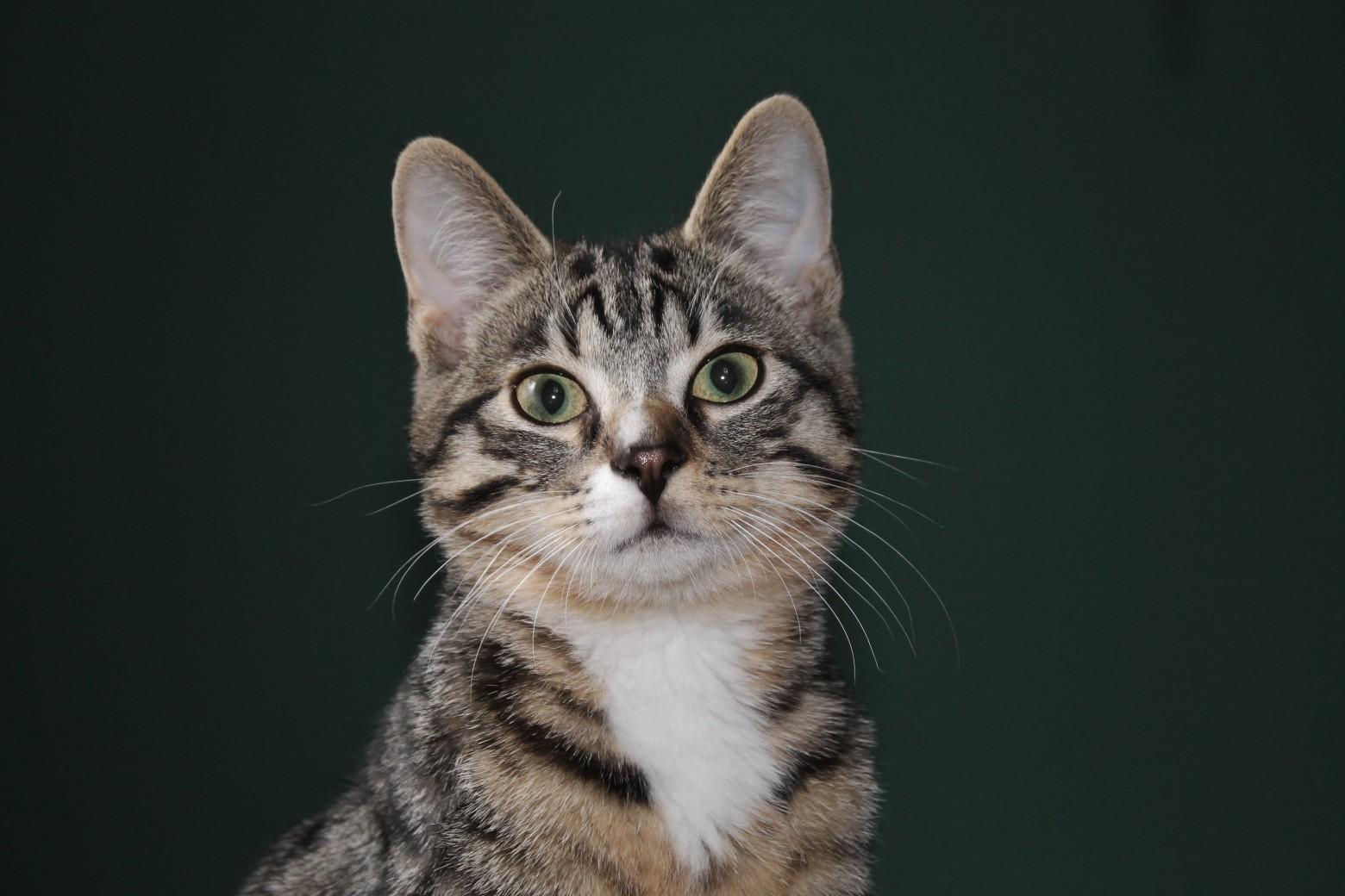 Animaux portrait chat sur fond noir images photos gratuite images gratuites et libres de droits - Image animaux gratuite ...