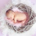 bébé qui dort dans un nid images photos gratuites