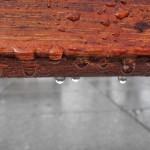bois goutte de pluie drop images photos gratuites