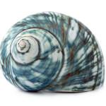 escargot bleu coquille de mer isolé sur fond blanc images photos gratuites