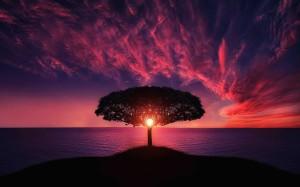 incroyable coucher de soleil un arbre et la mer images photos gratuites