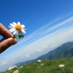 main fleur paquerette ciel bleu images photos gratuites