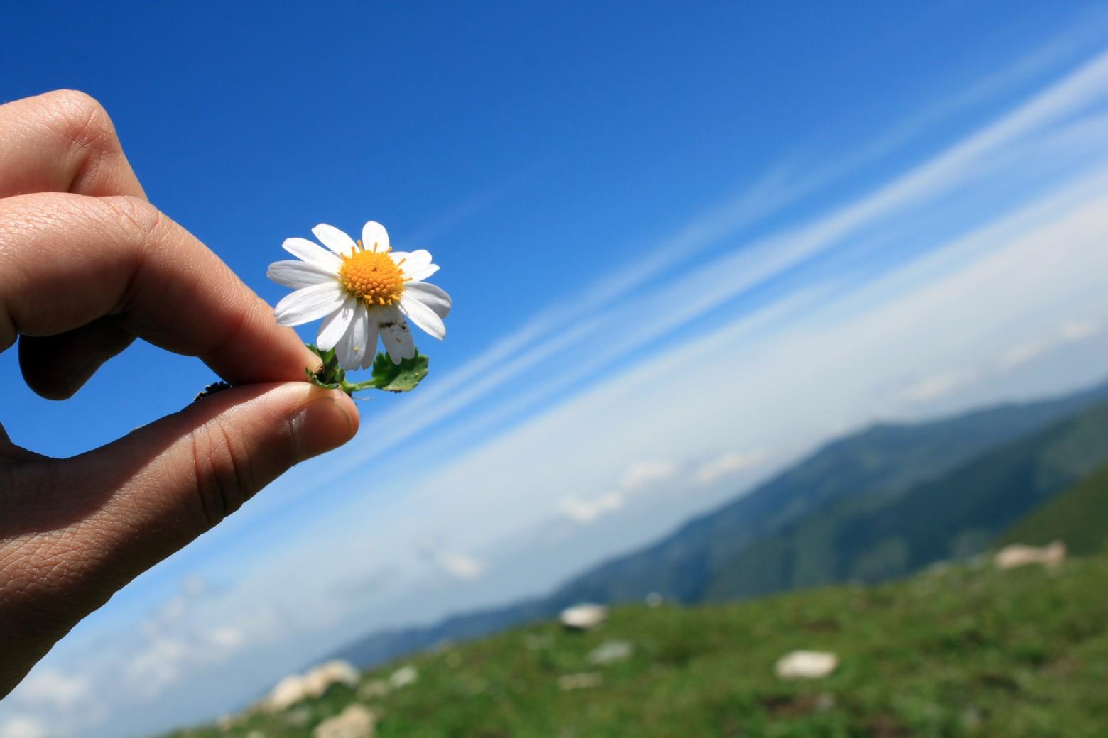 Main Fleur Paquerette Ciel Bleu Images Photos Gratuites Images