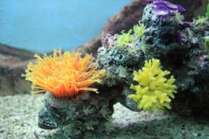 récif de corail coloré mer océan images photos gratuites