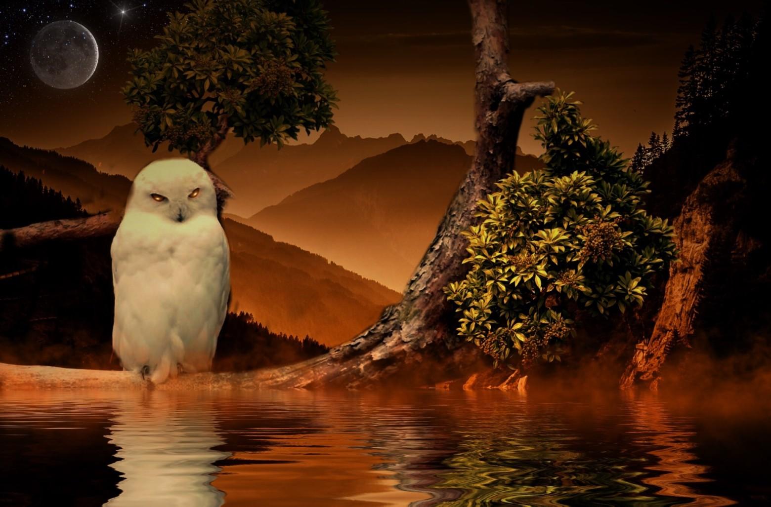 Photos gratuites fond d 39 cran chouette mystique oiseau images gratuites et libres de droits - Image de chouette gratuite ...