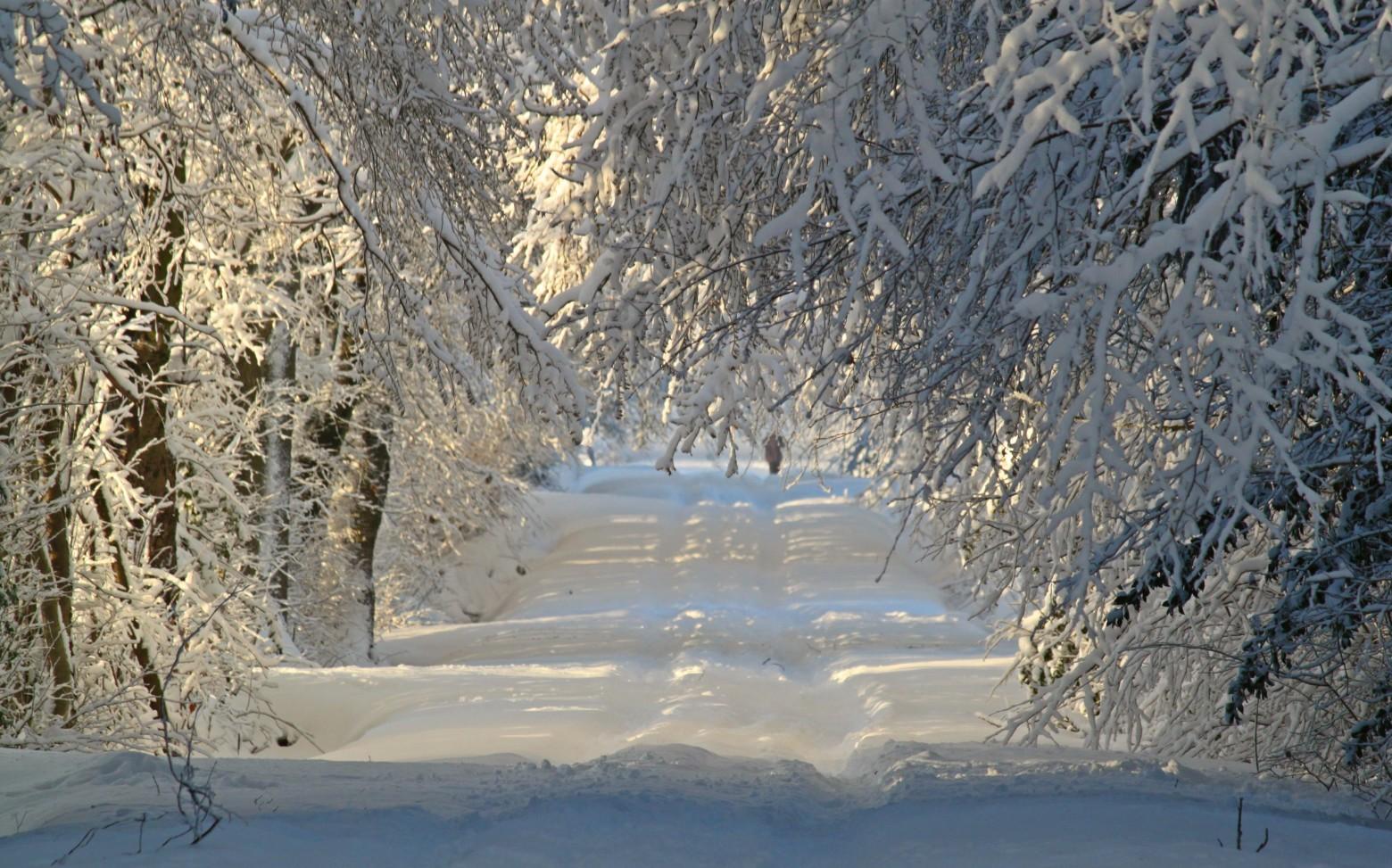 Neige hiver paysage nature for t sapin photos gratuites - Photos de neige gratuites ...