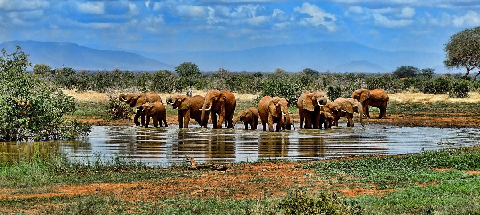 L phant savane safari photos gratuites images gratuites et libres de droits - Photos d elephants gratuites ...