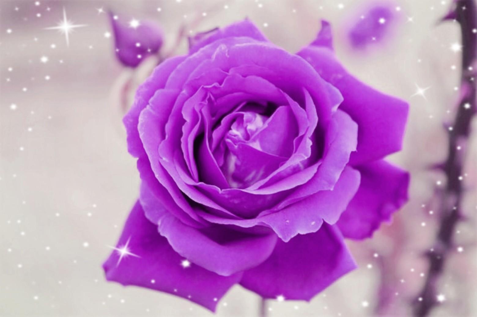 Fond D Ecran Fleur Rose Photos Gratuites Images Gratuites Et