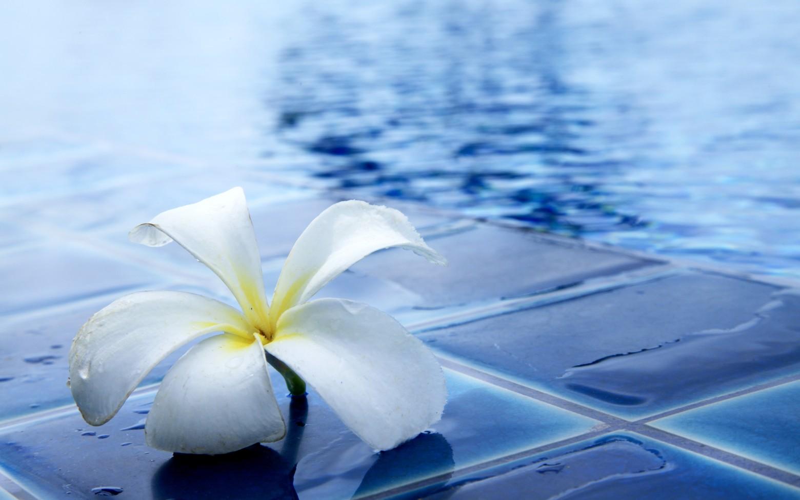 Fond D écran Zen Goutte Pluie Fleur Photos Gratuites